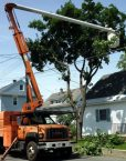 ComEd Tree Trimming Scheduled in Our Area!